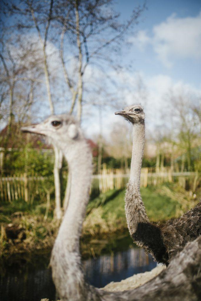 Dierenpark Friesland